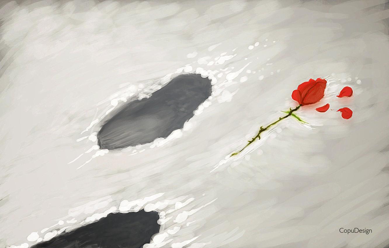 Фото обои цветок, снег, цветы, следы, роза, лепестки, прощай, goodby