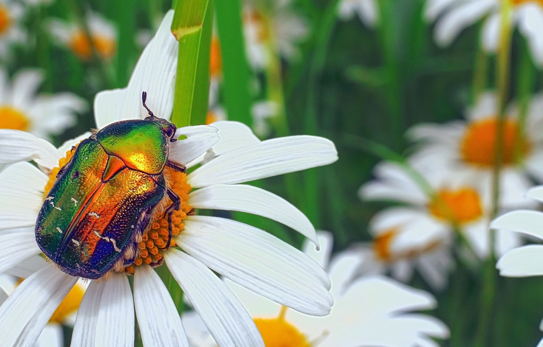 картинка жук летит к цветку показалось