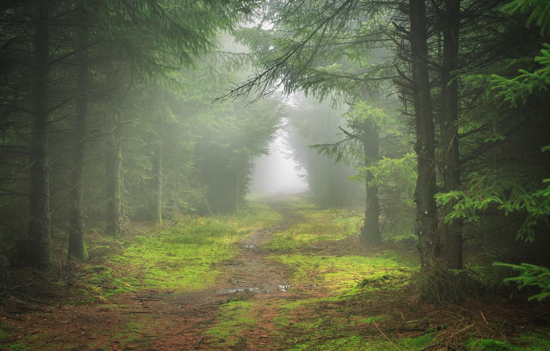 Фото обои лес, пейзаж, природа, туман