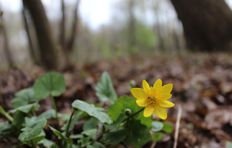 Весенние желтые лесные цветы фото