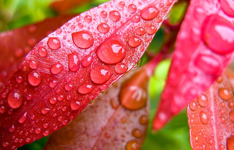 Фото обои листья, капли, роса, растение
