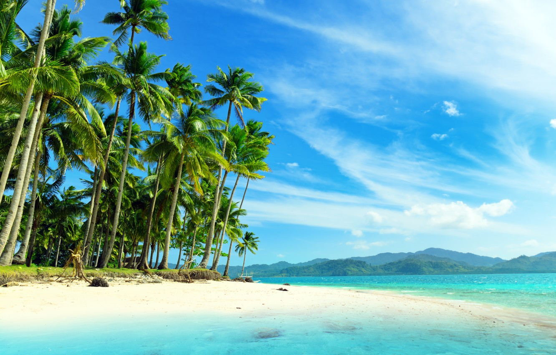 Фото обои море, пальмы, побережье, красота