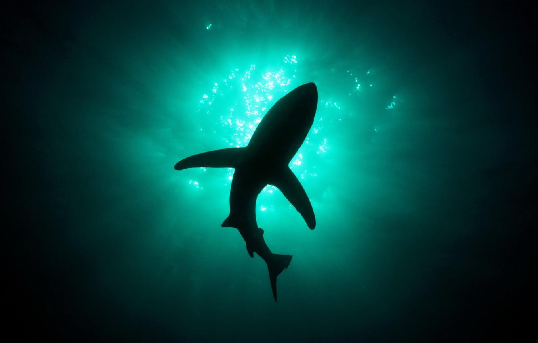 Фото обои свет, акула, глубина