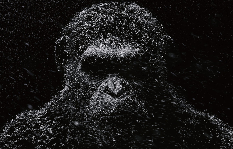 Фото обои Цезарь, Movie, Планета обезьян: Революция, Dawn of the Planet of the Apes