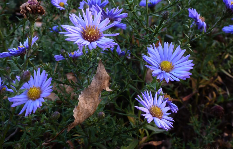 Фото обои поле, осень, цветы, лист, лепестки, луг