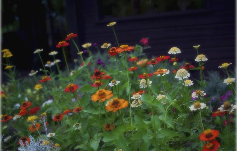 Фото обои поле, листья, цветы, луг, клумбв
