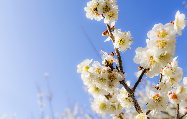 промышленных картинки весна апрель на рабочий стол приход был