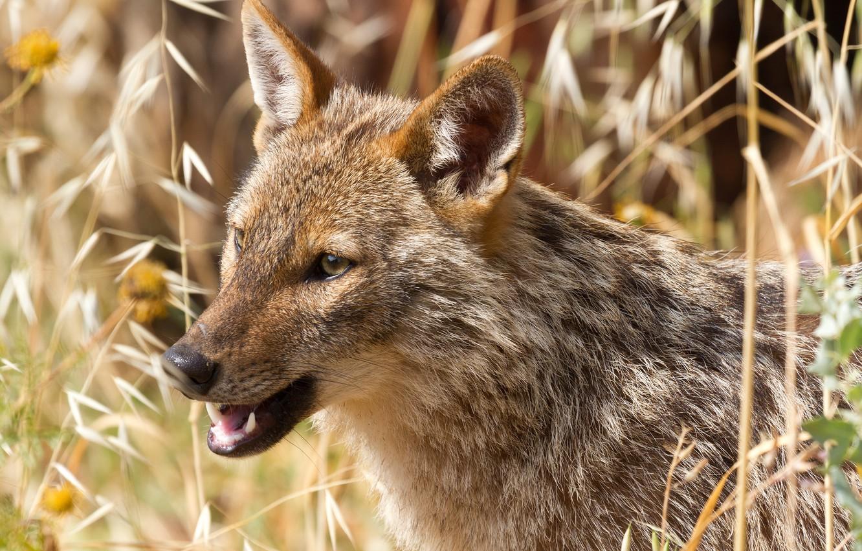 дикие животные беларуси фото и названия уметь его правильно