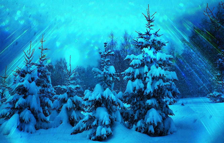 выставляют свои фото елки в зимнем лесу открытки посвящаются