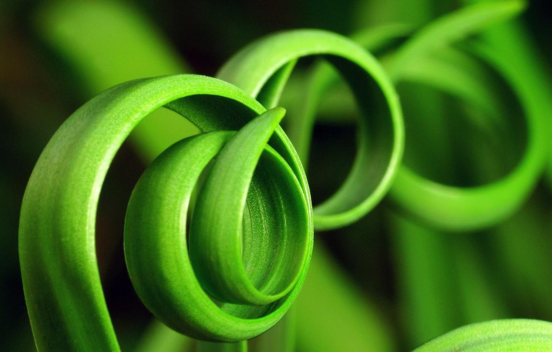 Фото обои зелень, трава, фото
