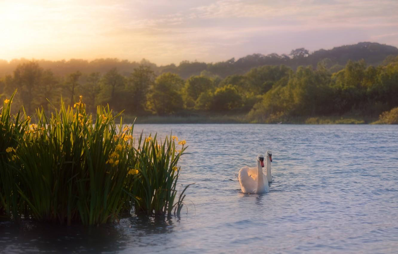 Фото обои небо, вода, солнце, облака, деревья, пейзаж, цветы, птицы, природа, туман, озеро, пруд, настроение, рассвет, берег, …