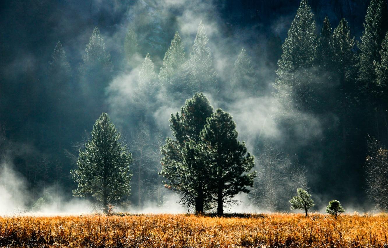 Фото обои деревья, поляна, Лес, дымка, хвоя