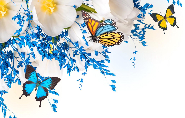 Обои мотылек, цветы, Коллаж. Разное foto 8