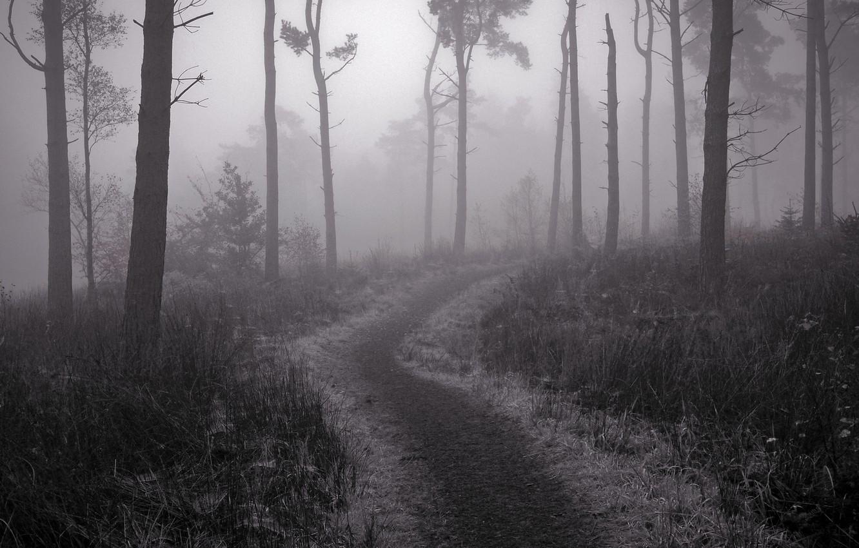 Фото обои туман, тропа, Лес, сумерки