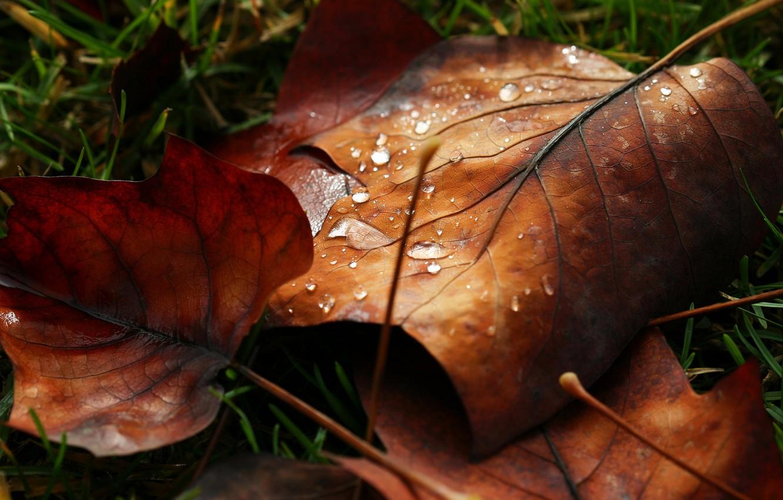 Фото обои листья, вода, макро, роса, капля, листик, листочек, nature, water, autumn, macro, drops, leaf, dew, leave