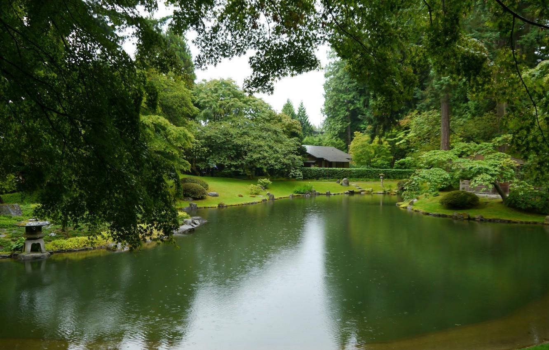 этого стали картинки вид сада с озером лук золотистого