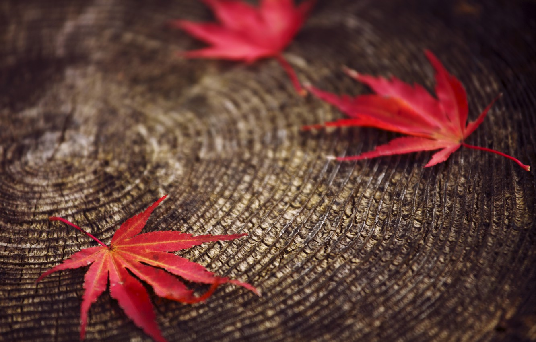 Фото обои макро, размытость, Листья, пенек, красные, осенние