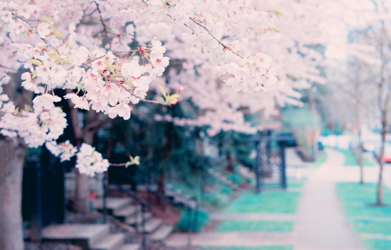 Фото обои цветы, дерево, весна, tree, spring, blossoms