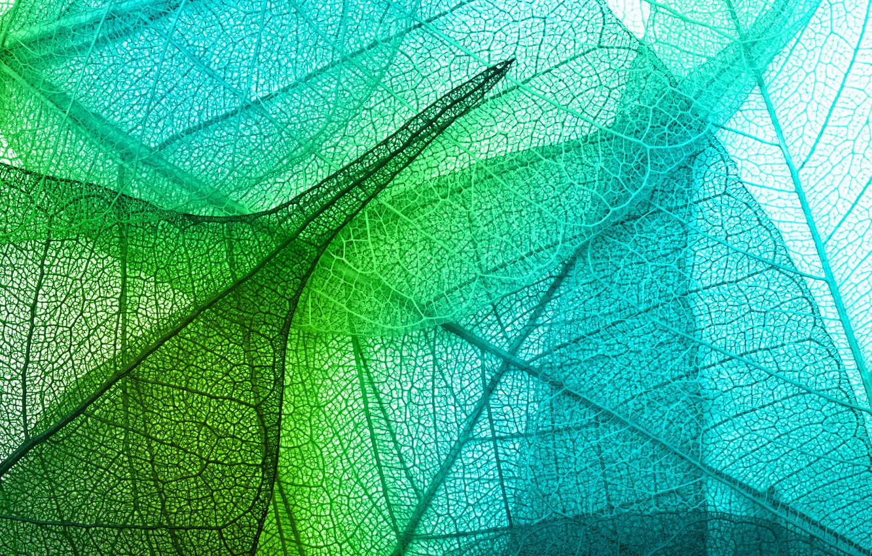 Фото обои листья, green, leaves, macro, transparent