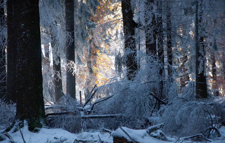 Фото обои зима, лес, снег, деревья