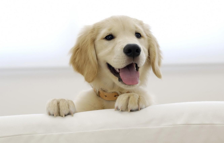 funny dog names - 480×360