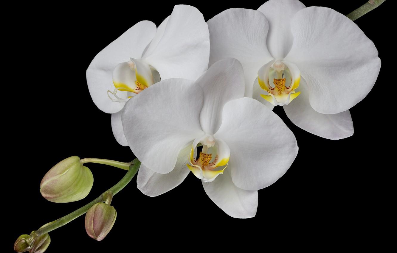 передняя фото белая ветка орхидеи знаешь, кем хочешь