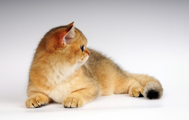 Фото обои кот, котенок, рыжик