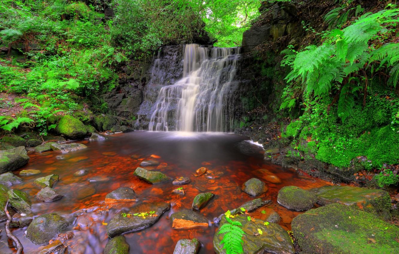 Фото обои лес, ручей, камни, Англия, водопад, мох, кусты, Rivington, Tigers Clough
