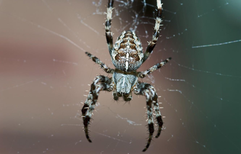Обои Spider, паутина, мрак, паук. Разное foto 8