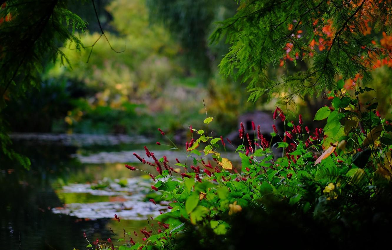 Фото обои ветки, пруд, парк, Англия, боке, England, Гэмпшир, Hampshire, Ромси, Sir Harold Hillier Gardens, Romsey