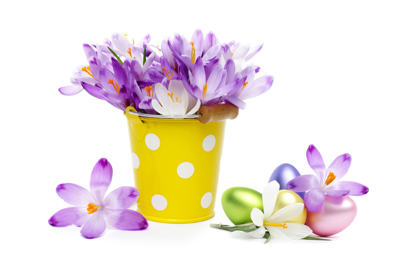 Фото обои яйца, букет, крокусы, ведро, flowers, spring, eggs, easter, crocus