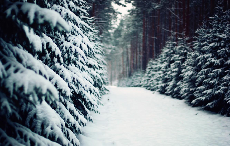 Фото обои зима, лес, природа, тропа, ели, дорожка, сосны, ёлки, польша, poland