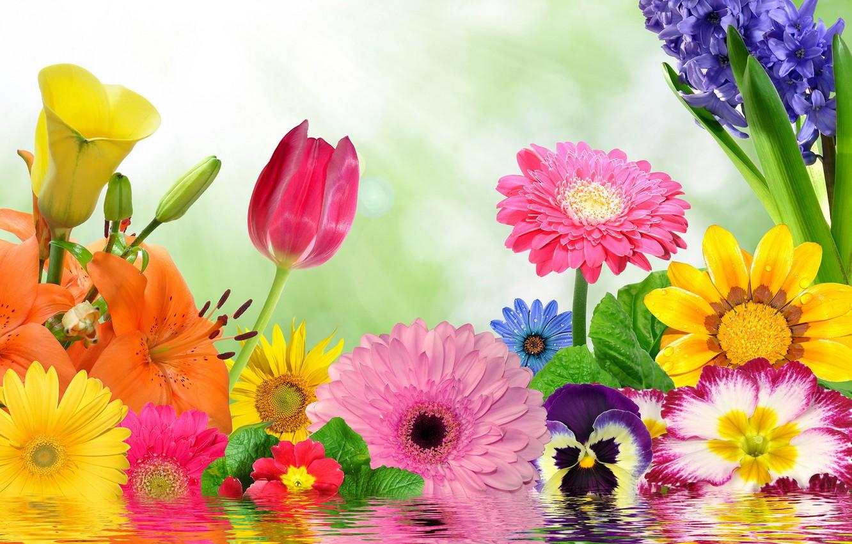 Фото обои цветы, colorful, цветение, water, blossom, flowers, spring, reflection