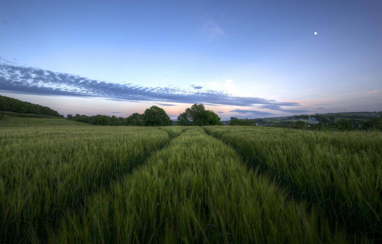 Обои высокая трава, сумерки, облака. Природа foto 10