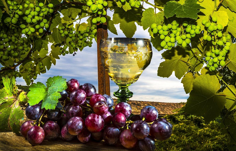 Обои красное, вино, бутылка, виноград, лоза. Разное foto 13