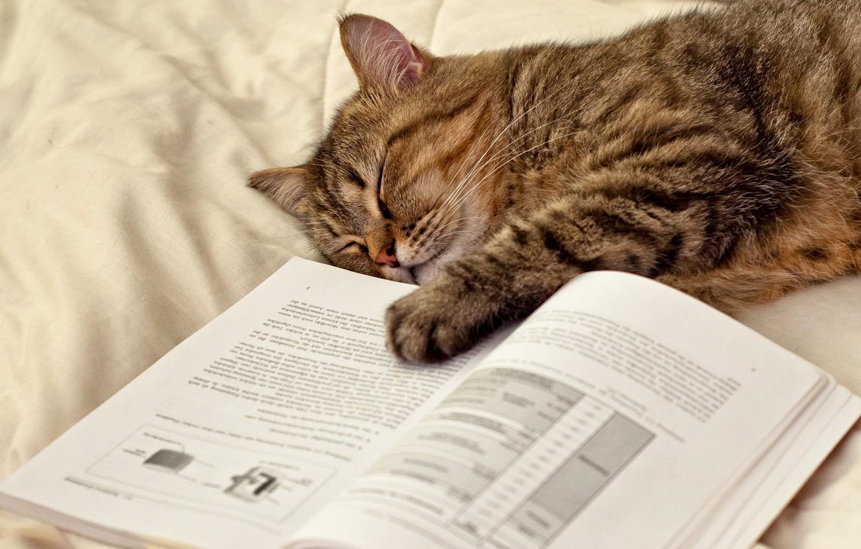 Фото обои кошка, кот, лапа, спит, лежит, книга, страницы