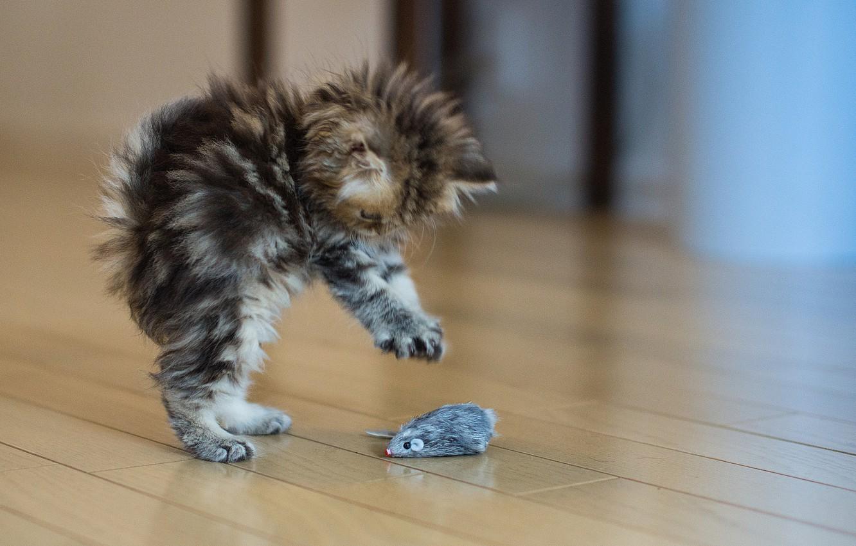 Фото обои котенок, серый, испуг, игрушка, Кошка, пушистый, пол, ситуацыя, мыш