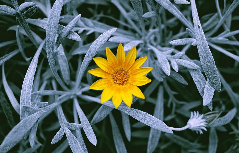 Фото обои цветок, листья, растения