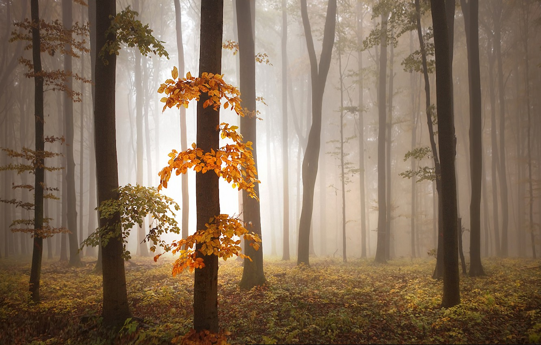 Фото обои осень, деревья, туман