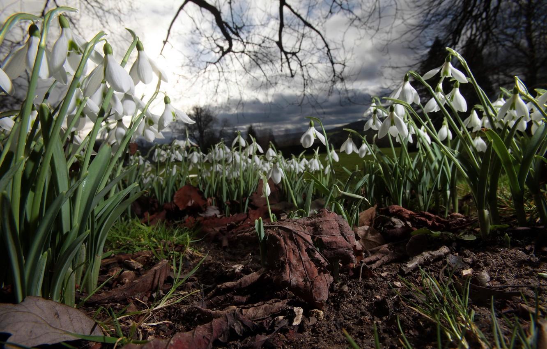 Фото обои цветы, ночь, природа