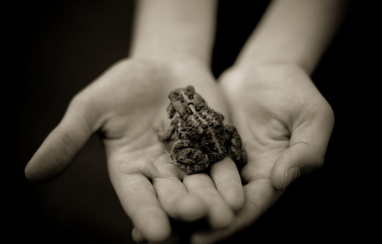 Фото обои grey, hands, image, Frog
