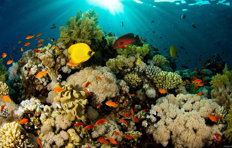 Фото обои море, океан, кораллы, подводный мир, тропические рыбки