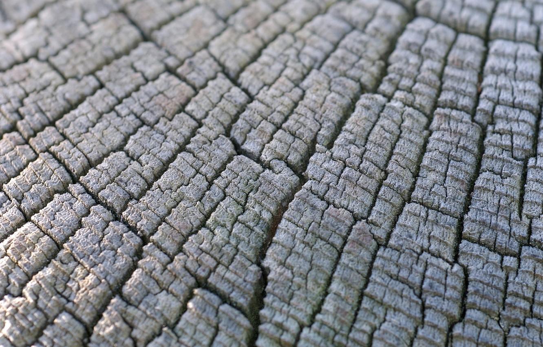 Фото обои макро, дерево, пень, текстура, текстуры, древесина, пеньки, пенёк