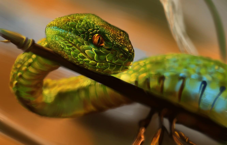 Фото обои взгляд, природа, змея, ветка, чешуя, зеленая, ползет