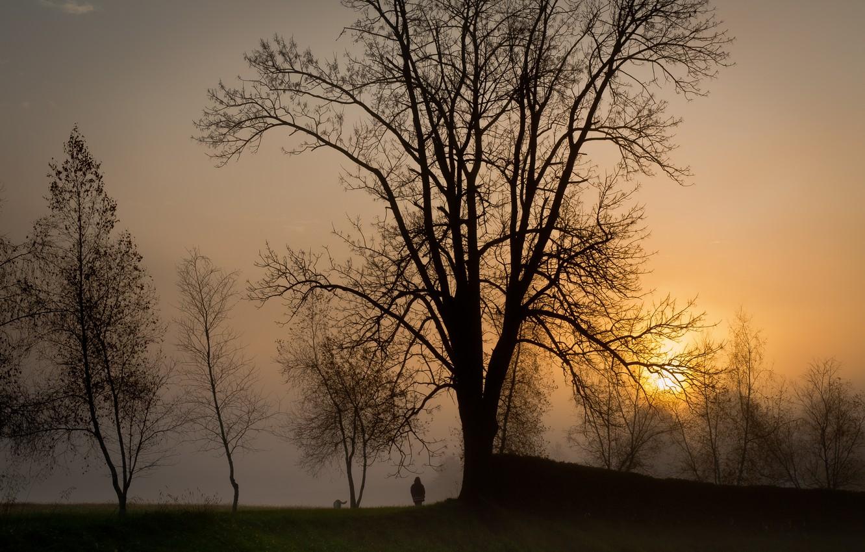Фото обои солнце, деревья, закат, туман, человек, Вечер, собака, прогулка, силуэты