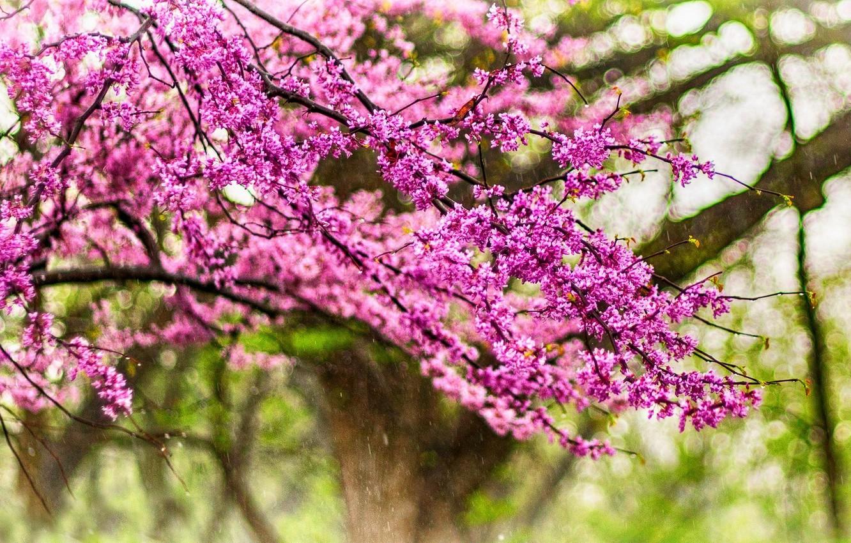 Фото обои капли, деревья, цветы, природа, парк, дождь, весна, rain, trees, nature, park, flowers, drops, spring, walk