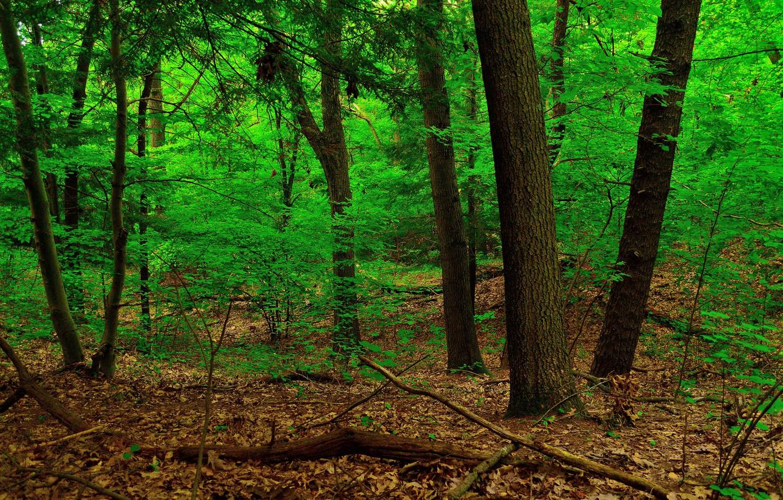 Фото обои лес, листья, деревья, заросли, ствол
