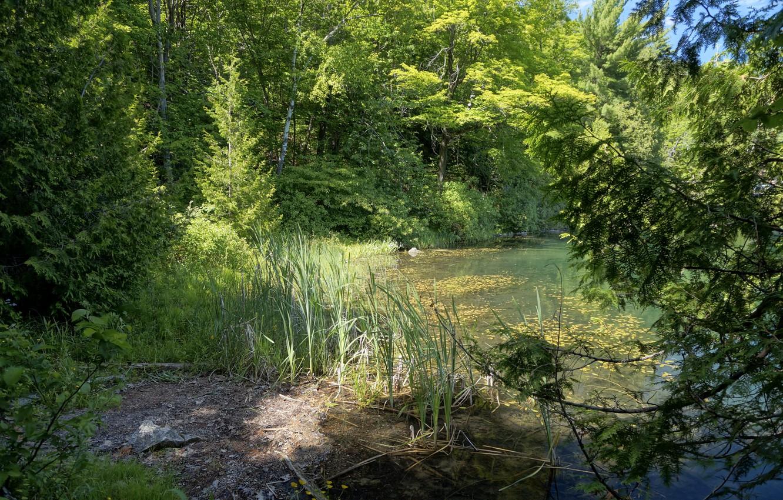 Фото обои зелень, деревья, пруд, парк, камыши, Канада, Gatienau Park