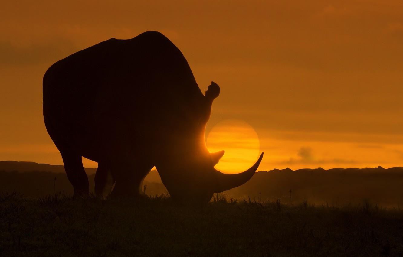 Фото обои рассвет, арт, Африка, Носорог