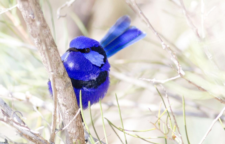 Фото обои природа, птица, цвет, ветка, перья